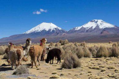 Bolivie - 2015